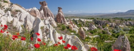 Fairy Chimneys Poppies