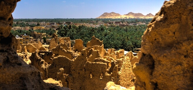 View over Siwa Oasis
