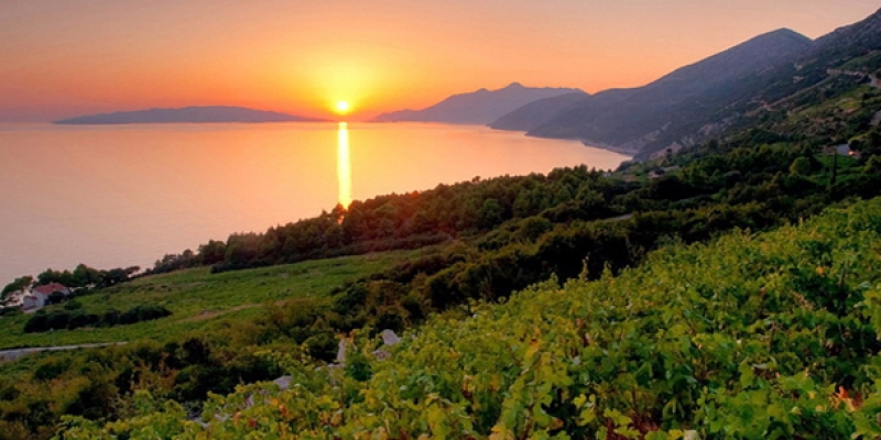 Croatia wine tours